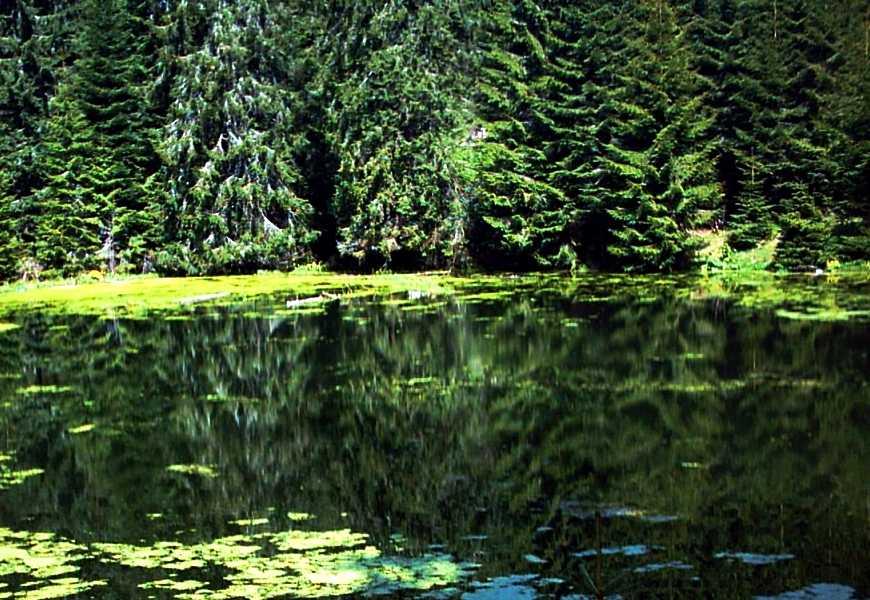 Excursie la Lacul Colibita si Taul Zanelor