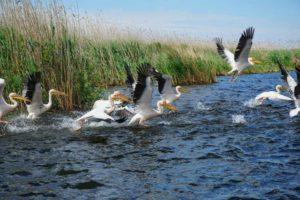Fascinatia Deltei Dunarii – UNESCO  15-17 mai 2020