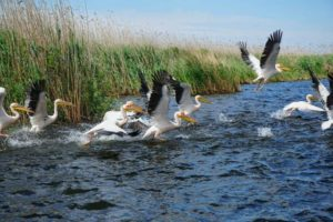 Croaziera in Delta Dunarii 14 - 17 mai 2020