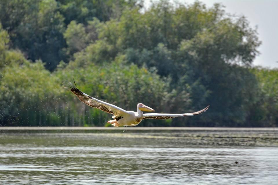 Excursie Delta Dunarii